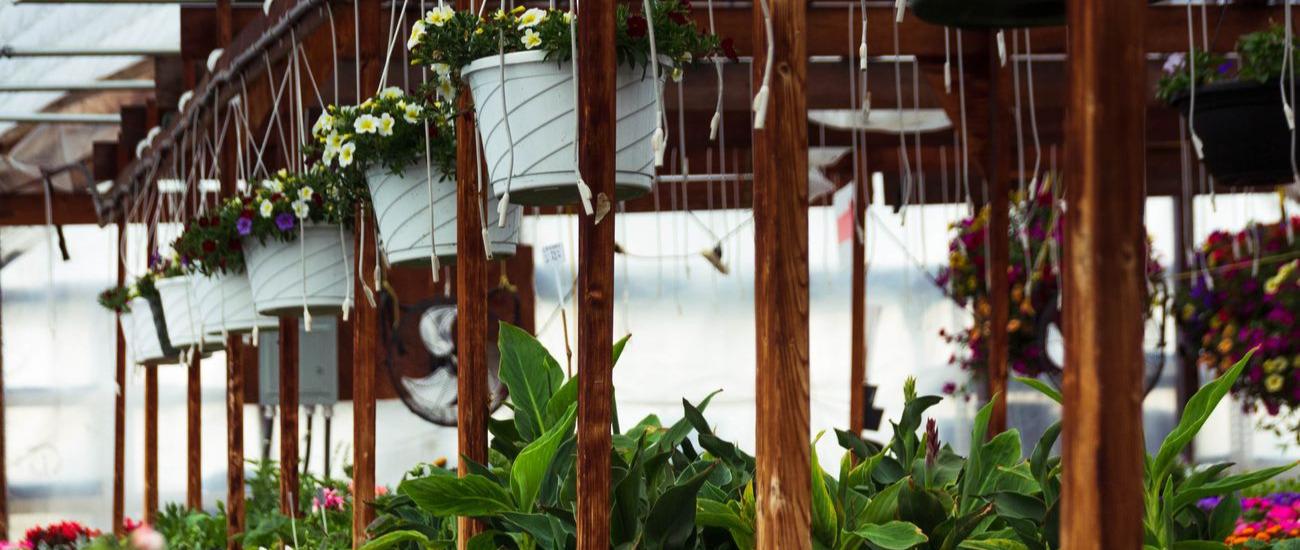 OLLEK Landscaping & Nursery